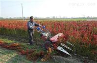 辣椒割晒机批发 拖拉机牵引甘蔗收割机