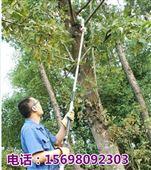 两米长树枝修剪机 高枝锯 树枝修剪机厂家