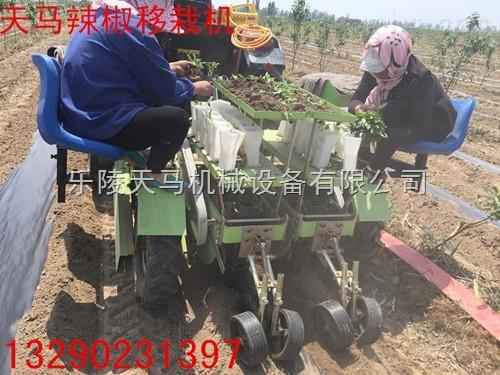 2ZQ-蔬菜插秧机,蔬菜移栽机乐陵天马生产厂家zui专业