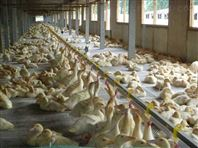 成套环保饲养设备自动养殖供水线设备