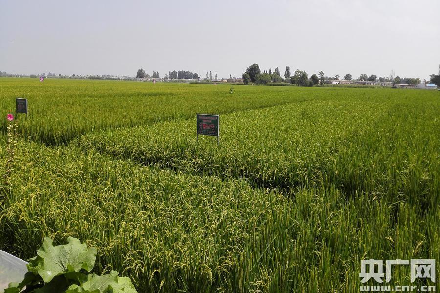 大疆创新MG—1农业植保机喷药演示