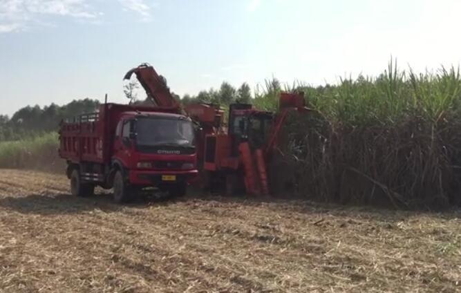 广西农机院4GZ-180型甘蔗收割机作业视频