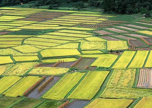 加快农业结构调整 强化农业基础支撑