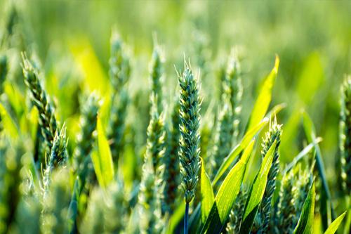 推进农业结构性改革 提高农业竞争力